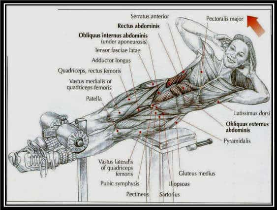 How To Use A Roman Chair Effectively Plus Great Exercises