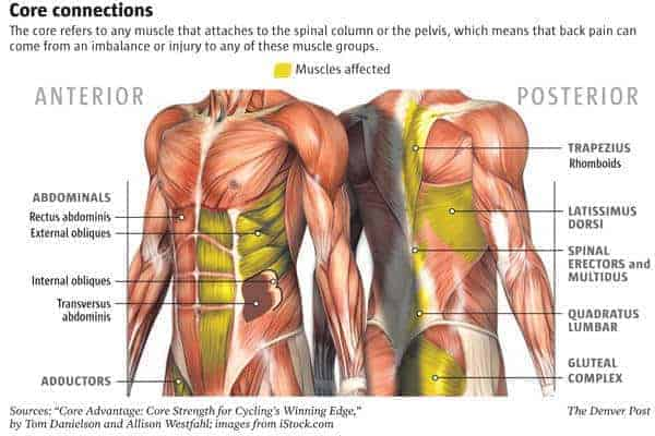 list of muscles