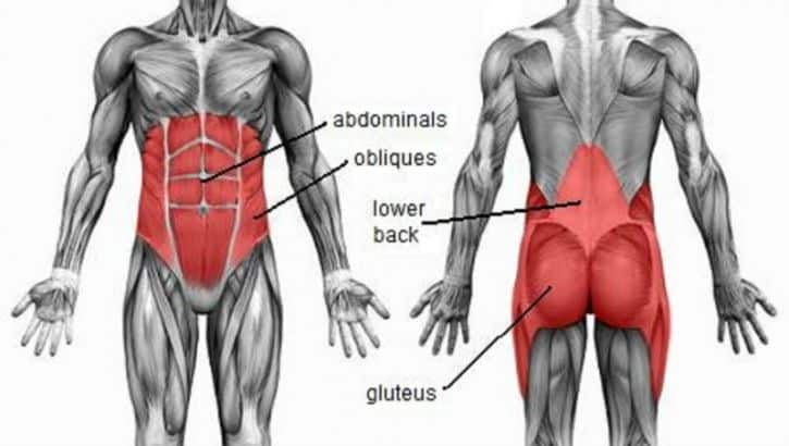 core muscles anatomy